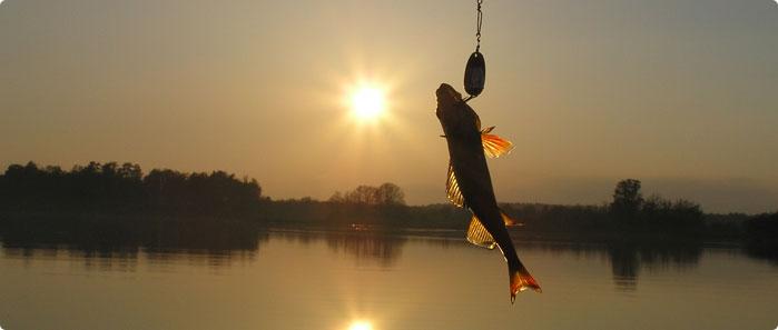 fiske_m
